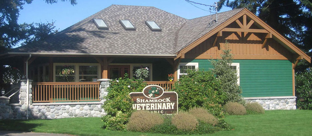 Shamrock Veterinary Clinic - Full Service Veterinary Hospital